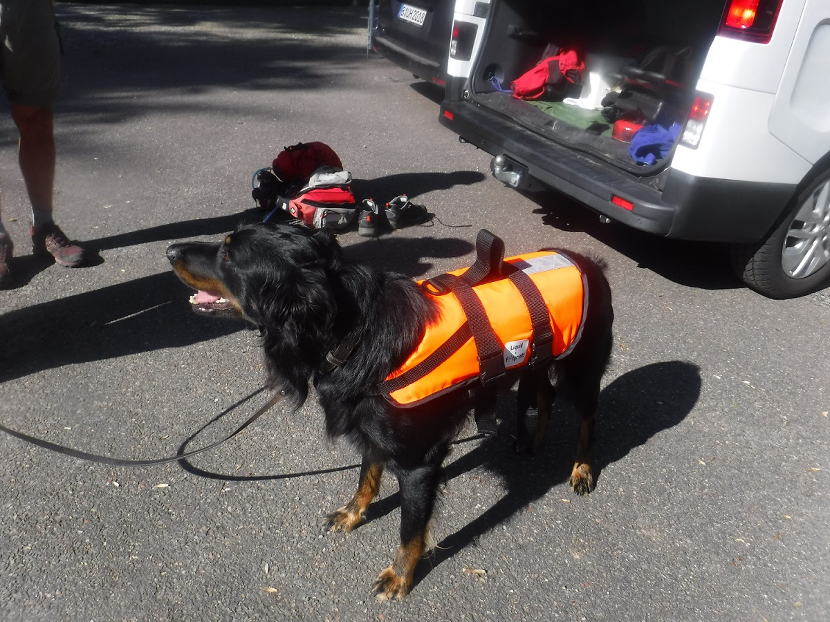 Dog in a buoyancy aid